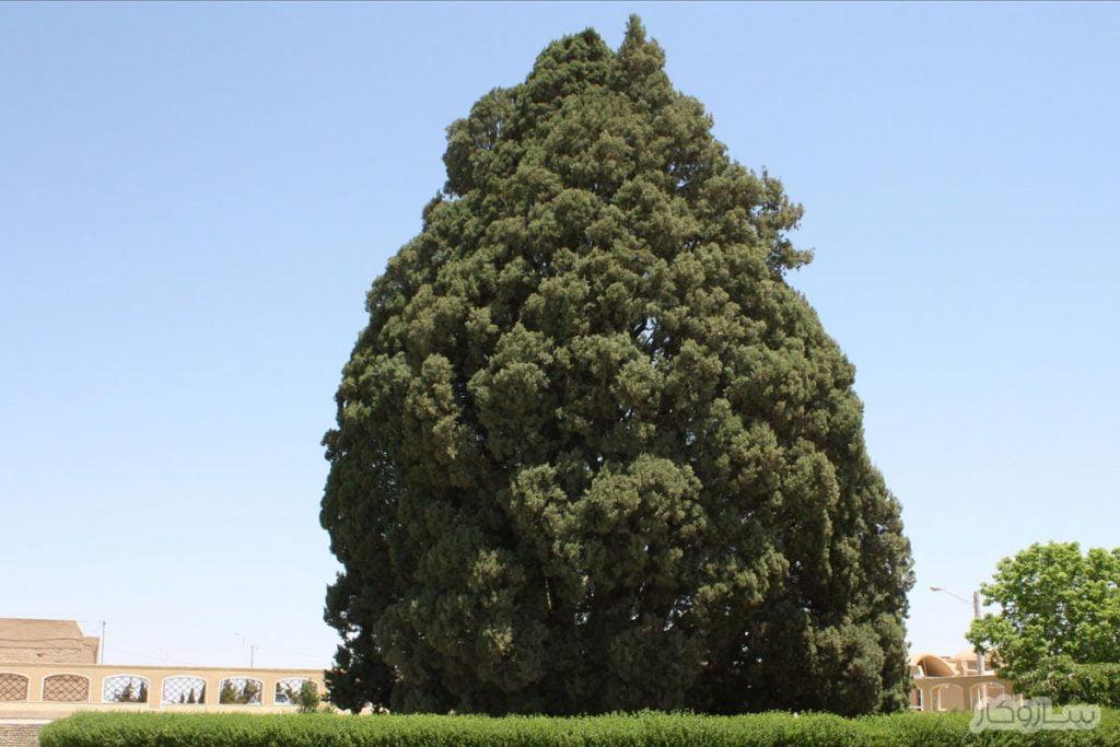 درخت زربین
