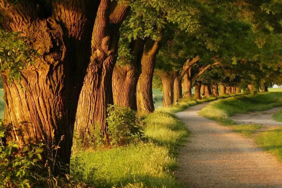انواع درخت